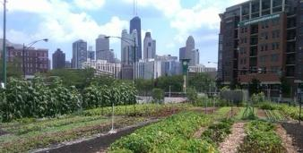 urban gardens with buildings in the background