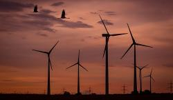wind park at sunset with flying birds - copyright markogrothe pixabay